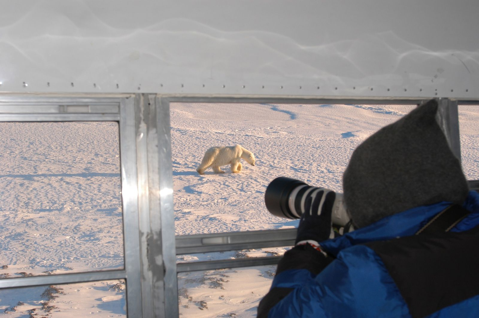 Photo from inside Tundra Buggy Churchill
